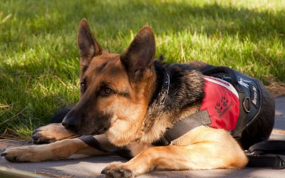 Stay Out of the Doghouse: Know the Laws Surrounding Service Animals