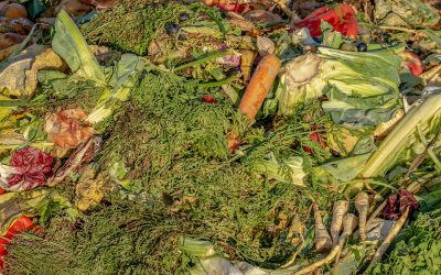 What Food Can I Compost?