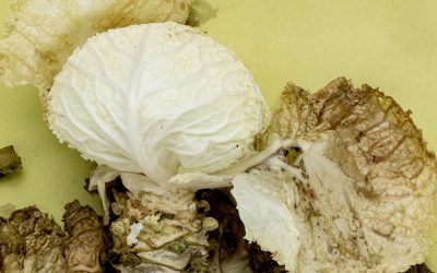 The Growing Problem: Food Waste in Restaurants
